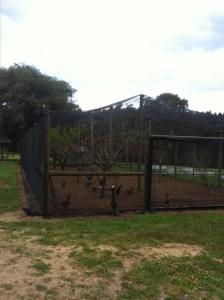 Orchard fencing installation-Dunsborough-Busselton-Vasse-Quindalup-Eagle Bay-Cowaramup-Margaret River and Yallingup-0418 903 281